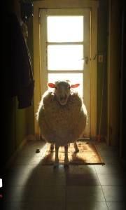 Czarna owca online / Black sheep online (2006) | Kinomaniak.pl