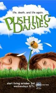 Gdzie pachną stokrotki online / Pushing daisies online (2007-) | Kinomaniak.pl